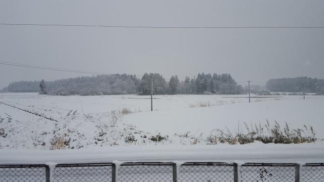 雪がすごい