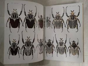 図説 世界の昆虫 ページ内