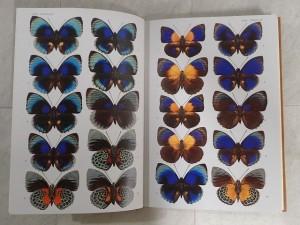 図説 世界の昆虫 内容